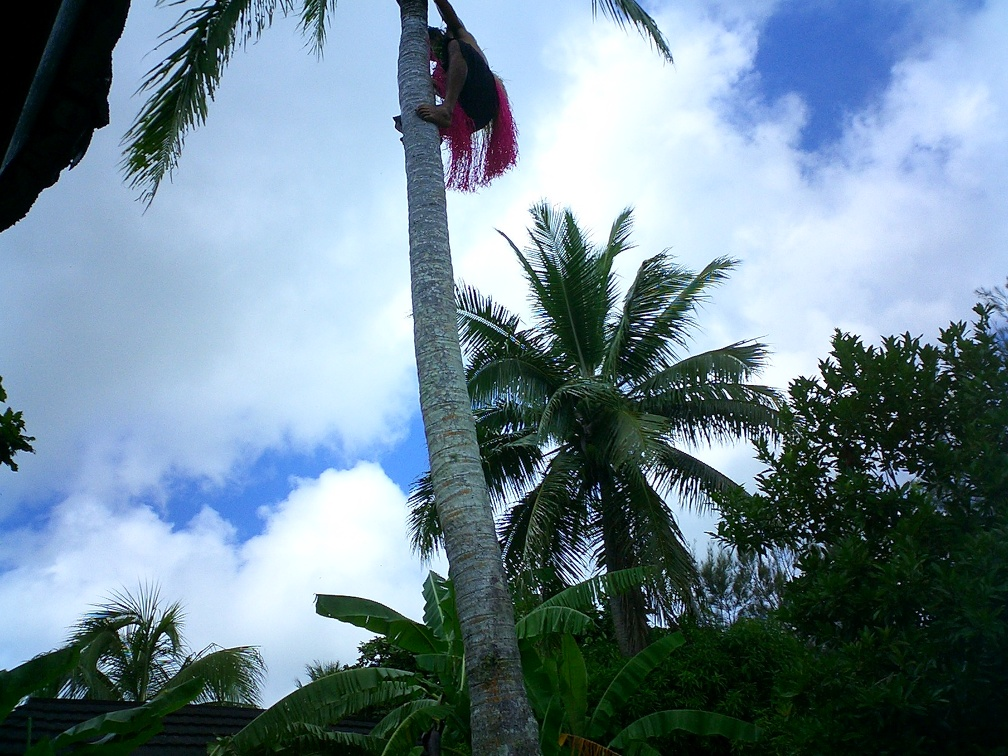 Climbing a coconut palm 2